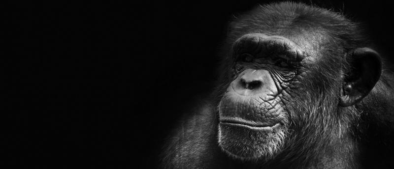 The chimp paradox business book review